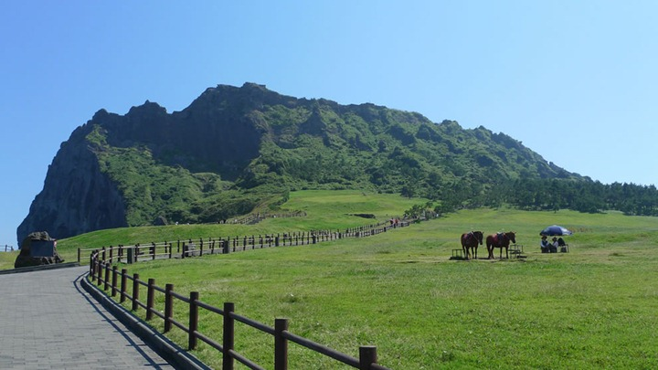 Path- -Horses-Jeju-Island