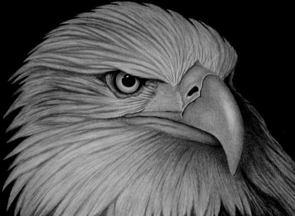 american_eagle_by_sinsenor600_439
