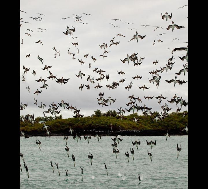 Galapagos-Puerto-Villamil