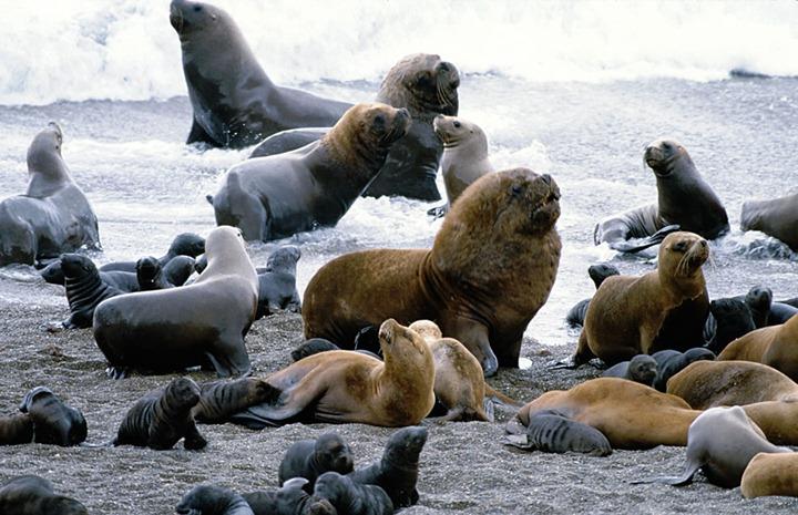 Sea-Lions-on-Galapagos-Islands