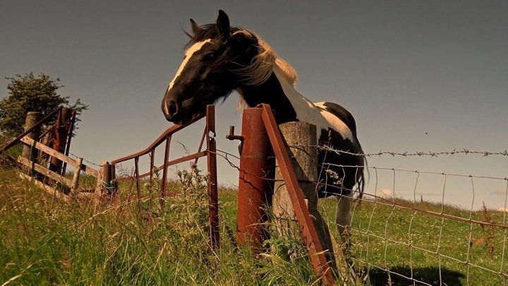 Curious-horse