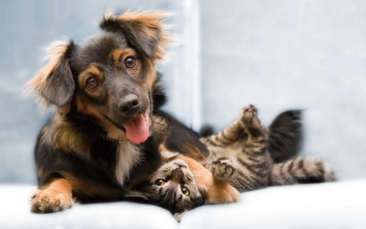 Dog-and-kitten
