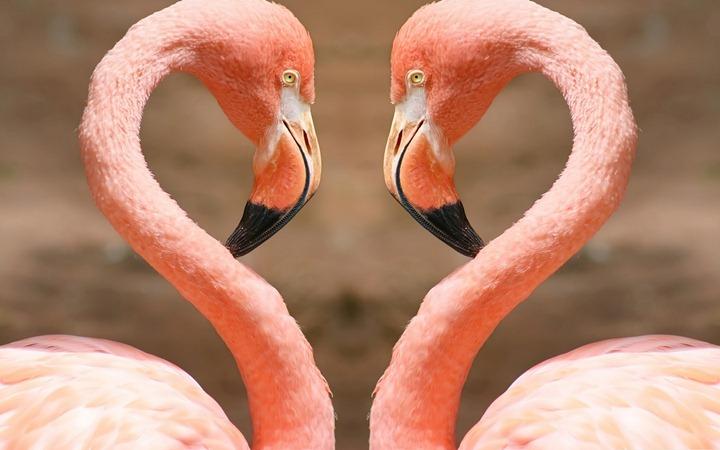 Heart-by-flamingos