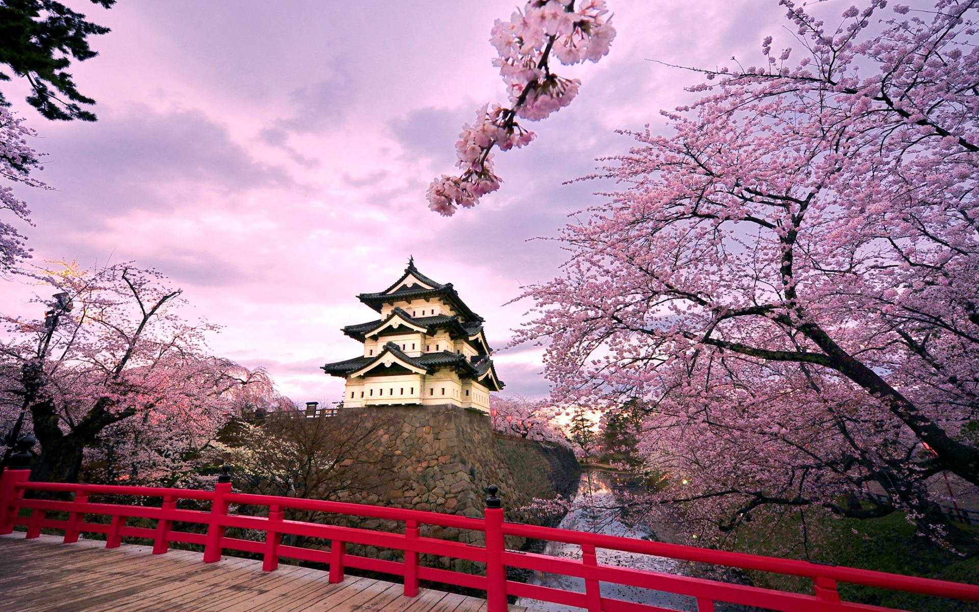 ТОП–12 самых интересных фактов о Японии. Чем же так удивительна страна восходящего солнца?