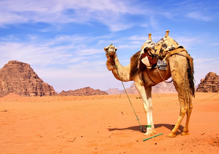 Come-closer-said-the-camel-so-I-can-spit-upon-you