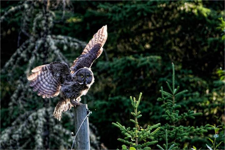 2011-wildlife-c2a9-2012-christopher-martin-7