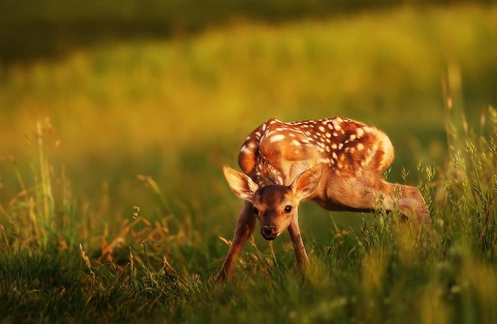 Beautiful-animals-photographu-stumbleupon-1