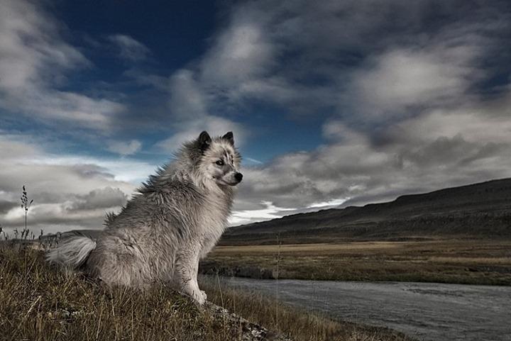 Beautiful-animals-photographu-stumbleupon-12
