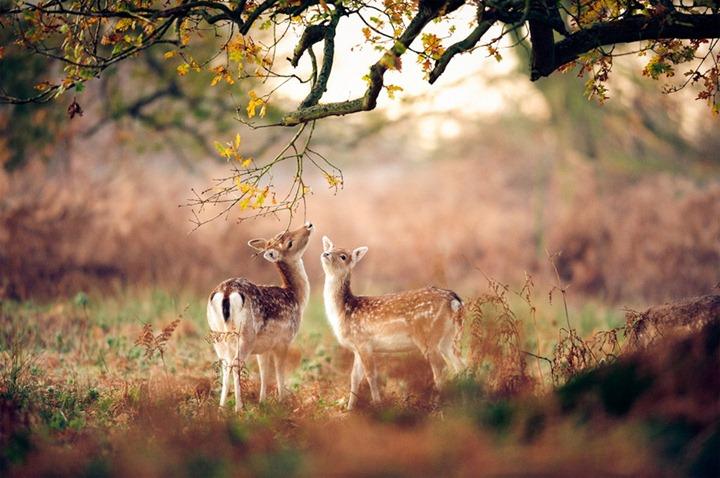 Beautiful-animals-photographu-stumbleupon-27