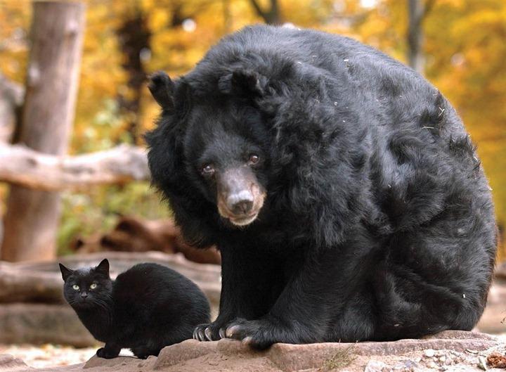 ss-111014-unlikely-friends-bear-cat_ss_full