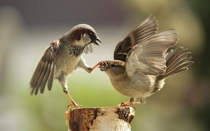 Shut-up!