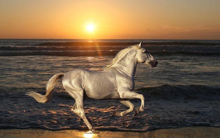 Silver-horse