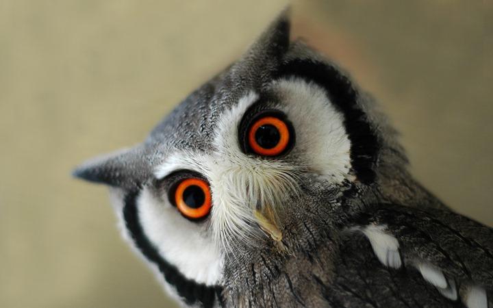 Surprised-eagle-owl