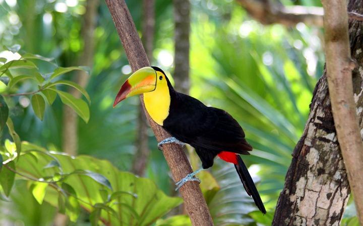Tropical-birds