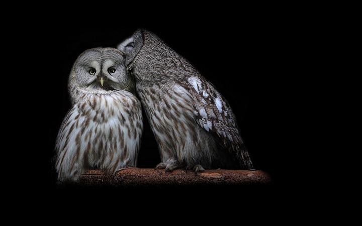 Whisper-of-owl
