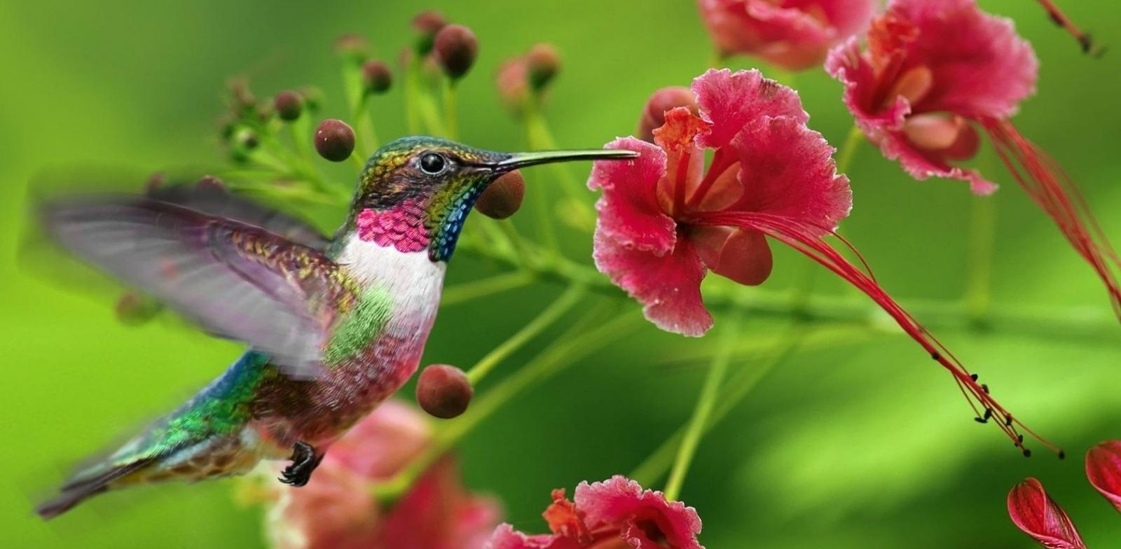 Колибри – самые голодные птицы на свете!