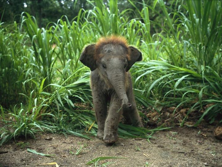 baby-asian-elephant_227_990x742