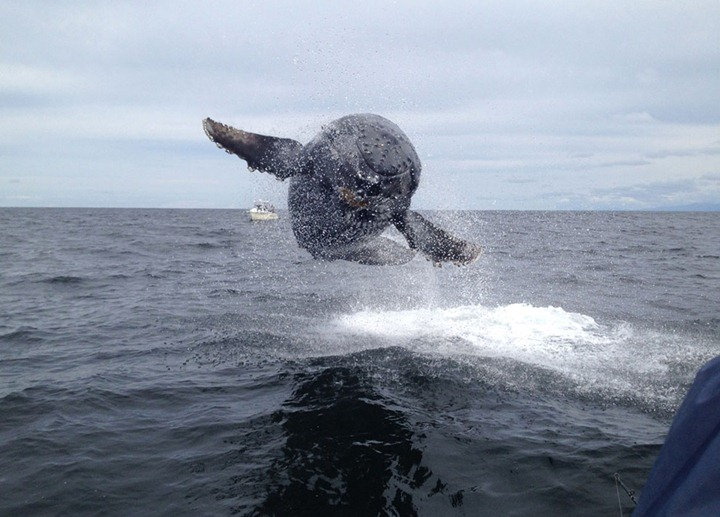 s_n36_humpback