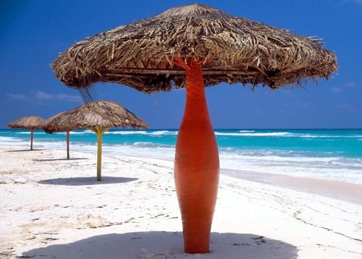 Второй по величине остров, на котором располагается республика Куба – Исла де ла Хувентуд (Остров Юности). Он входит в состав архипелага Канарреос и занимает 3056 км². Общая площадь Кубы составляет 110860 км².