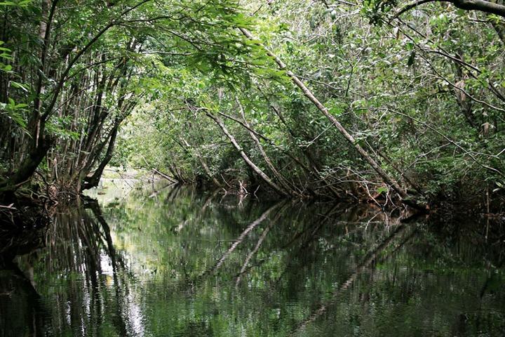 Amazon-rainforest-inside-of-kills