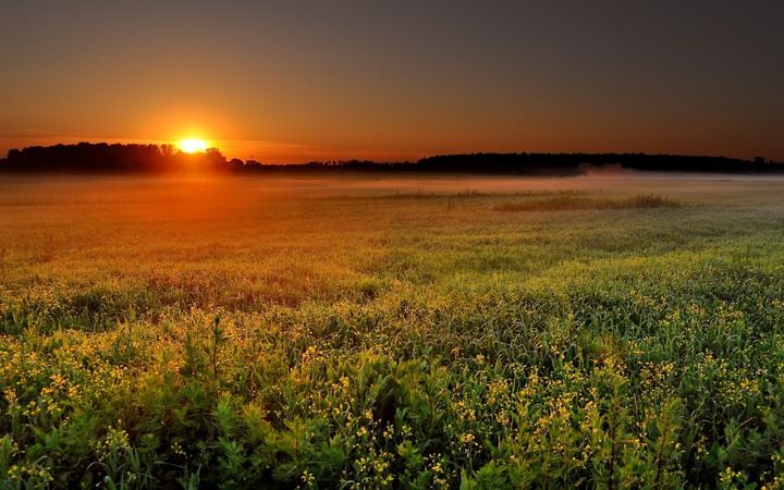Sunset-from-the-wild-field