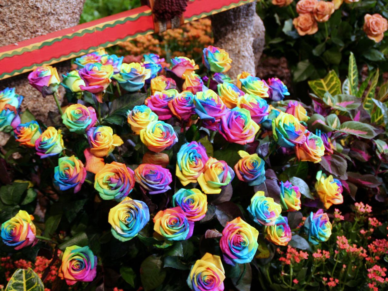 О самых дорогих и интересных цветах!